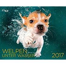 Welpen unter Wasser 2017: Wandkalender