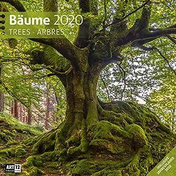 Bäume 2020, Wandkalender / Broschürenkalender im Hochformat (aufgeklappt 30x60 cm) - Geschenk-Kalender mit Monatskalendarium zum Eintragen