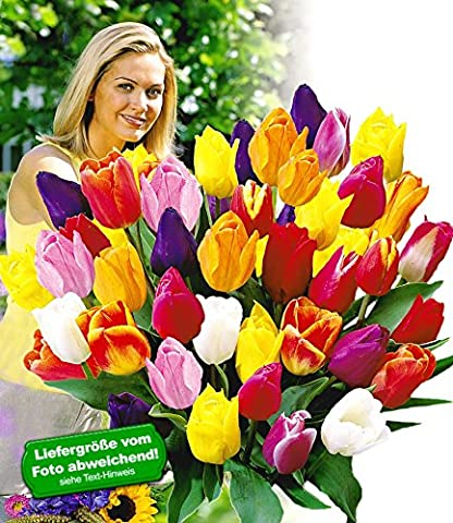 BALDUR-Garten Schnitt-Tulpen-Mischung, 120 Zwiebeln