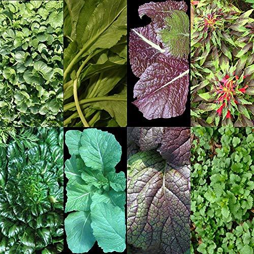 VISA STORE Asian Greens Mix - 200 Samen Sommer Aussaat Microgreens Non-GMO Hardy US