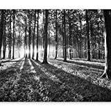 murando - Vlies Fototapete 300x210 cm - Vlies Tapete - Moderne Wanddeko - Design Tapete - Wald Natur Landschaft Bäume c-B-0127-a-c
