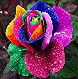#4: Colorful Rainbow Rose Flower Seeds Home Garden Plants Seeds Multi-Color 20 seeds