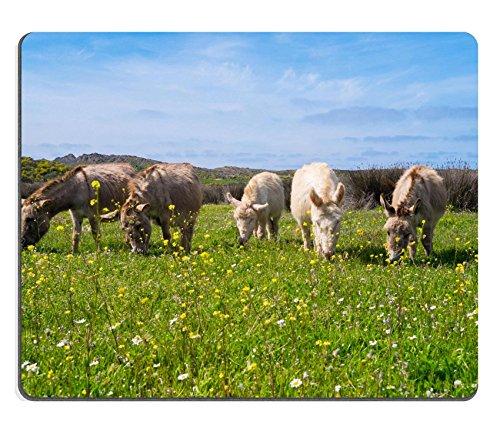 msd-caucho-natural-alfombrilla-para-raton-imagen-id-34995712-los-burros-en-sarda-asinara-isla-en-cer