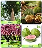 #7: Tree Seeds Home Depot Malabar Neem -Plywood Tree,Wallnut ,Peach ,Guava Combo For Home Garden Timber Species & Nut Seeds & Fruit Seeds Seeds By Creative Farmer
