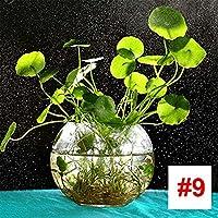 Rosepoem Semillas de Plantas acuáticas, 1000 Unidades/Paquete Peces de Agua Césped de Semillas