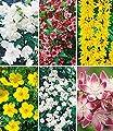 BALDUR-Garten 5 Meter Blüh-Hecken-Kollektion, Blütenhecke 6 Pflanzen Forsythie, Weigelie, Jasmin, Deutzie, Potentilla, Spirea von Baldur-Garten - Du und dein Garten