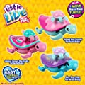 Little Live Pets 28315 Turtles Single Pack