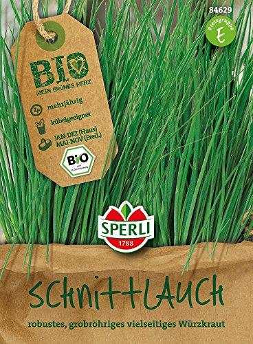 Schnittlauch - Schnittlauch Staro - Bio-Saatgut von Sperli-Samen