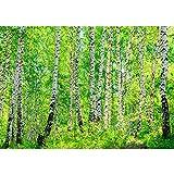 Fototapete 400x280 cm - ALLE TOPSELLER auf einen Blick ! Vlies PREMIUM PLUS - BIRCH FOREST - Birkenwald Bäume Wald Sonne Birkenhain Birke Birken Gras Natur Baum - no. 007