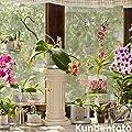 Orchitop M - Design Orchideentopf für alle Orchideen , Farbe transparent von Orchitop - Du und dein Garten