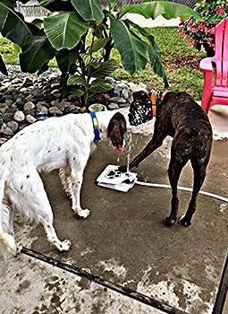 T Tocas ( TM) Automatique Chien frais fontaines d'eau avec 1 Hose mètres, Animal potable extérieur Outils de formation