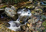 Panoramic Images – Stream flowing through rocks in a forest Roaring Fork Motor Nature Trail Great Smoky Mountains National Pa