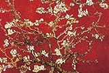 Buyartforless Mandel Blüten in Rot von Vincent Van Gogh 36x 24Kunstdruck Poster Wall Decor Museum Masters Blühende Bäume Spring