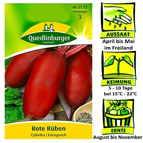 Quedlinburger Rote Rüben Cylindra – Beta vulgaris / Ertragreich / Ernte August bis November