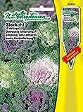 Zierkohl ' gekrauste Mischung' F1 einjährig, sehr attraktiv, bunte Herbstfärbung ( mit Stecketikett) Brassica oleracea