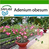 SAFLAX - Bonsai - Wüstenrose - 8 Samen - Mit Substrat - Adenium obesum