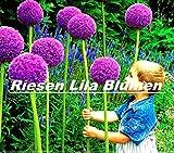 20x Riesen Lila Blumen Samen Blumensamen Hingucker Pflanze Rarität Garten Saatgut Neuheit #77