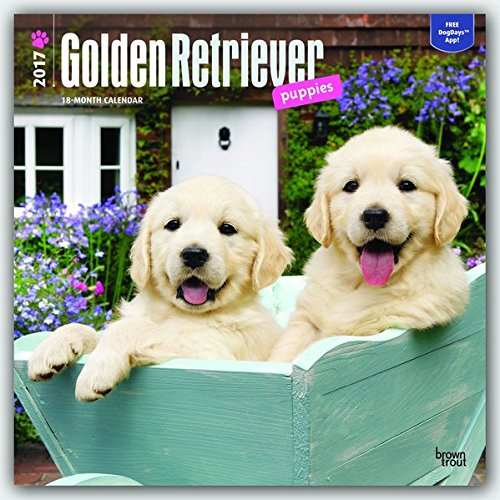 Golden Retriever Pdf