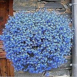 Hinmay Aufhängen Blumensamen Hängekorb Blue Linen Blumen Blume Samen, 40Stück, Blau