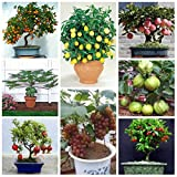 #2: M-Tech Garden Bonsai Fruit Seeds Mega Combo (Apple, Orange, Lemon, Guava, Cherry, Grapes, Papaya, Pomegranate)
