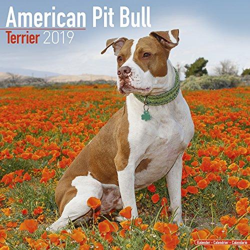 American Pit Bull Terrier Calendar 2019