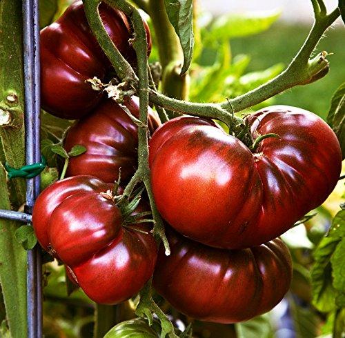 3 Sorten schwarze russische Tomaten Samen mit Black Prinz aus Sibirien