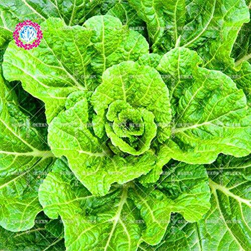 200 pcs / sac graines de chou chinois graines de légumes biologiques vert pour non-OGM sain pour les plantes de jardin à la maison de ferme graines 1