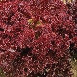 Pflück-Salat - Lollo Rosso (200 Samen)
