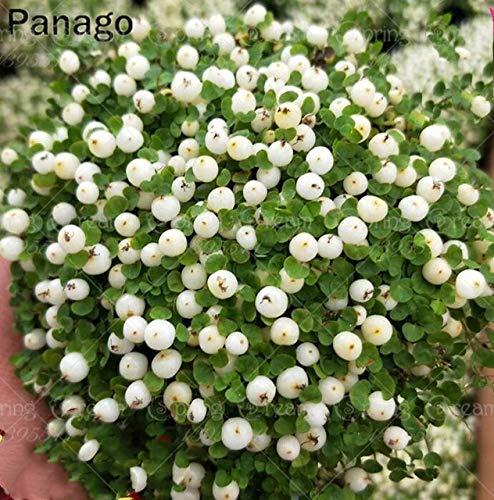 naranja 100pcs Nertera flor de la perla bonsai bonsai planta rara flor en maceta para el jardín de plantas de balcón perenne de flores de la perla: 2