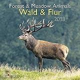 Wald & Flur 2018 - Naturkalender, Tierkalender, Landschaftskalender 2018 - 30 x 30 cm