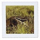 3drose QS _ 37634_ 1giand Ameisenbär EL Pantanal,