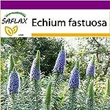 SAFLAX - Big Garden - Blauer - Natternkopf - 100 Samen - Echium fastuosa