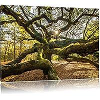 gigantesca verwzeigter albero, formato: 120x80 su tela, XXL enormi immagini completamente Pagina con la barella, stampa d'arte sul murale con telaio, più economico di pittura o un dipinto a olio, non un manifesto o un banner,
