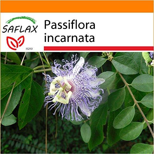 Galleria fotografica SAFLAX - Garden in the Bag - Fiore della passione - 5 semi - Passiflora incarnata
