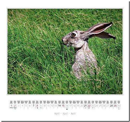 KANINCHEN: Original Stürtz-Kalender 2018 – Mittelformat-Kalender 33 x 31 cm - 6
