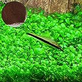 Semillas de plantas Luffy para acuario-Planta verde vibrante para acuarios...