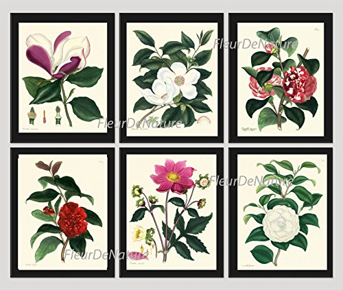 flower-print-set-of-6-antique-botanical-beautiful-magnolia-pink-red-white-camellia-garden-nature-pla