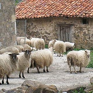 Basque Country Sheep Bells