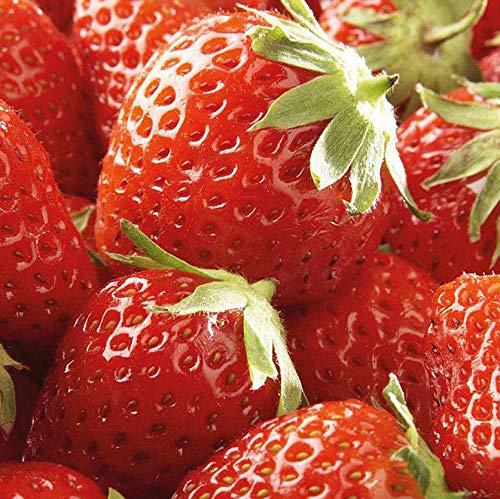 Portal Cool Samen Paket: Erd Gourmet Obst St Saat Mara Des Bois Everbearer In 1L Pot