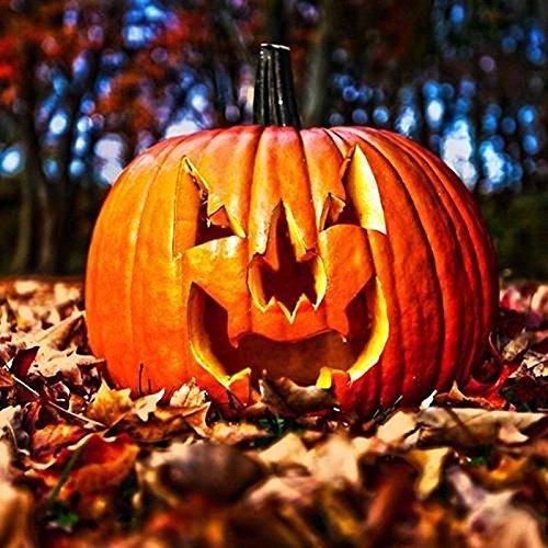 PLAT FIRM Keim Seeds: 25 - Samen. Jack Oââ'¬ËœLantern (Halloween) Kürbiskerne - Der Beste Kürbis für Das Schnitzen !!!