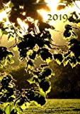 Kalender 2019 - Blätter in der Abendsonne: DIN A5, 1 Woche auf 2 Seiten