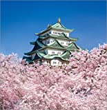 Impression sur bois 100 x 100 cm: Nagoya castle with cherry blossom in spring de Jan Christopher Becke