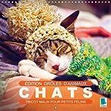Edition drôles d'animaux : chats - Tricot malin pour petits félins (calendrier mural 2016 300 × 300 mm square) : Jeux de noeuds et de pelote : faire du tricot avec des chats