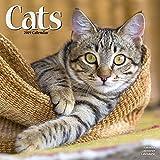 Cats Calendar 2019 (Square)
