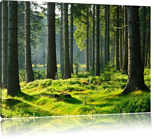 sonniger Tag im Wald, Format: 120x80 auf Leinwand, XXL riesige Bilder fertig gerahmt mit Keilrahmen, Kunstdruck auf Wandbild mit Rahmen, günstiger als Gemälde oder Ölbild, kein Poster oder Plakat (Ein Wald Tag Im)