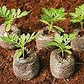 SiriDepot Saatgut, 45 mm, biologisch abbaubar, 300 Stück von SiriDepot auf Du und dein Garten