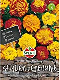 Tagetes Studentenblume, Plano Mischung