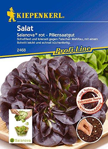 Salatsamen – Salat Salanova, rot von Kiepenkerl