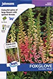 johnsons seeds - Pictorial Pack - Fiore - Digitale Excelsior Mix - 2500 Semi