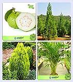 #5: Tree Seeds Plant Guava ,Japanese Cedar ,Thuja Orientalis ,Areca Palm Combo For Home Garden Fruit Seeds & Shade Tree/Ornamental Tree & Medicinal Plant Seeds & Ornamental Palm Tree Seeds By Creative Farmer